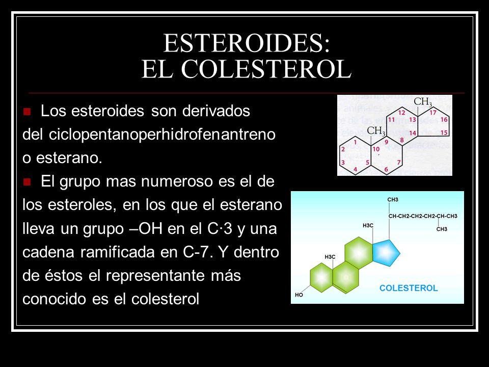 ESTEROIDES: EL COLESTEROL Los esteroides son derivados del ciclopentanoperhidrofenantreno o esterano. El grupo mas numeroso es el de los esteroles, en