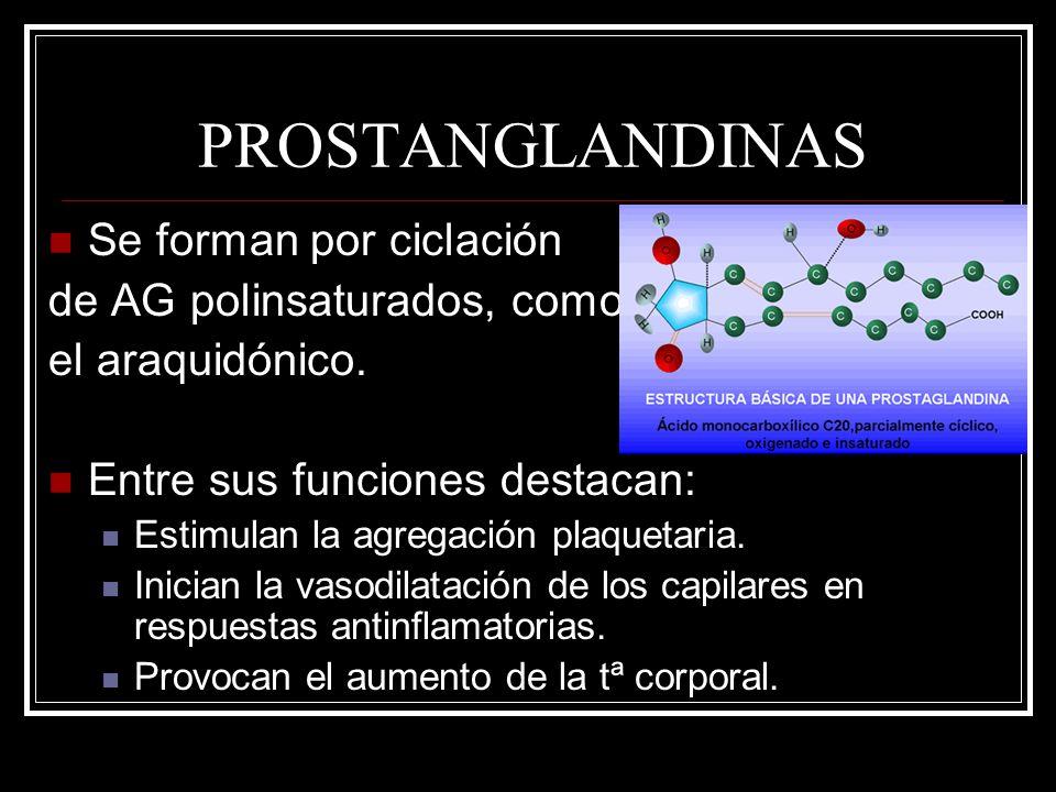 PROSTANGLANDINAS Se forman por ciclación de AG polinsaturados, como el araquidónico. Entre sus funciones destacan: Estimulan la agregación plaquetaria