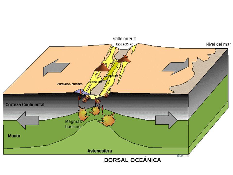 Las dorsales están cortadas perpendiculares a su eje por un sistema de fallas transformantes o de desplazamiento lateral.