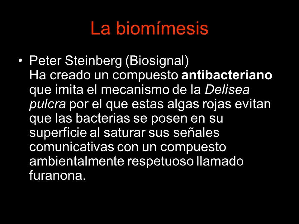 La biomímesis Peter Steinberg (Biosignal) Ha creado un compuesto antibacteriano que imita el mecanismo de la Delisea pulcra por el que estas algas roj