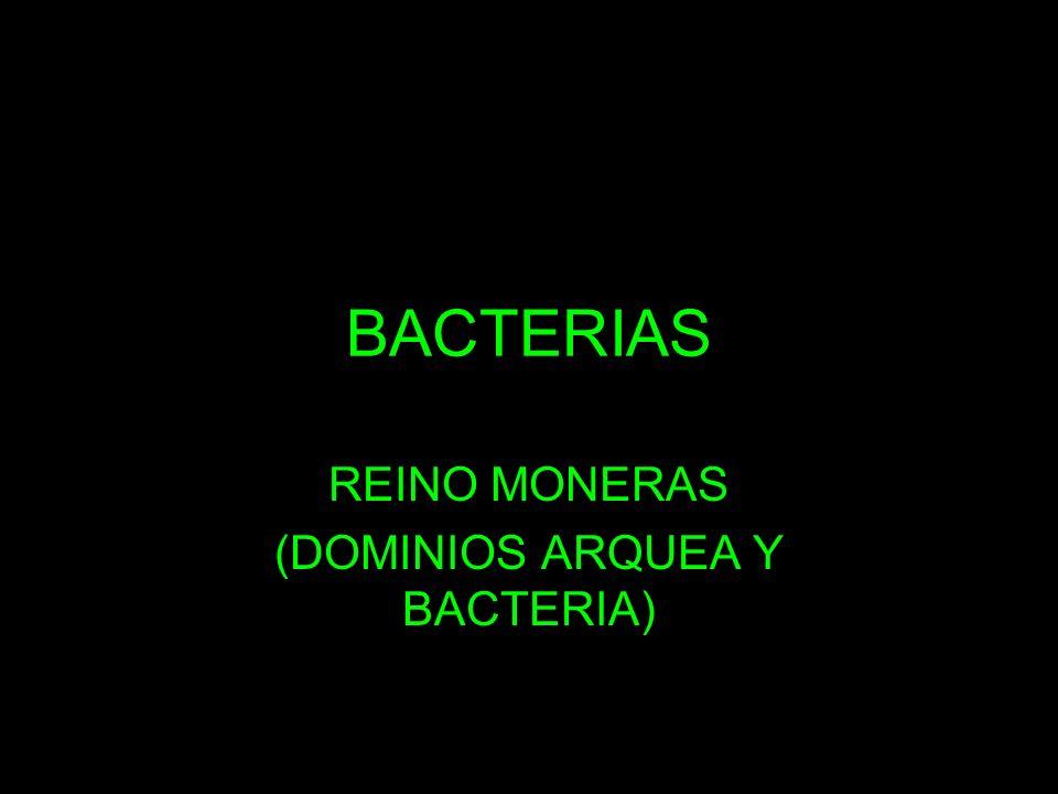 BACTERIAS REINO MONERAS (DOMINIOS ARQUEA Y BACTERIA)