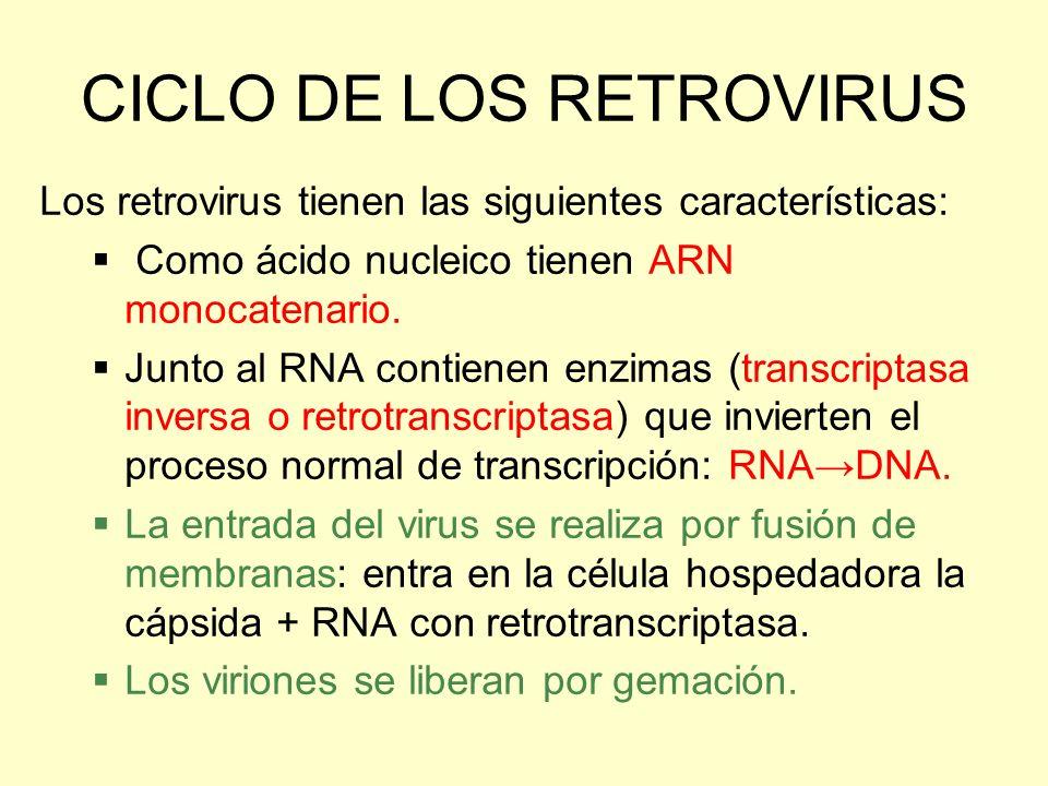 CICLO DE LOS RETROVIRUS Los retrovirus tienen las siguientes características: Como ácido nucleico tienen ARN monocatenario. Junto al RNA contienen enz