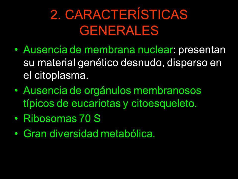 2. CARACTERÍSTICAS GENERALES Ausencia de membrana nuclear: presentan su material genético desnudo, disperso en el citoplasma. Ausencia de orgánulos me