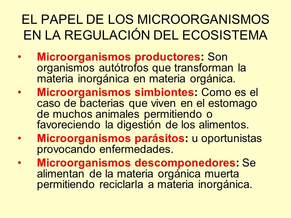 EL PAPEL DE LOS MICROORGANISMOS EN LA REGULACIÓN DEL ECOSISTEMA Microorganismos productores: Son organismos autótrofos que transforman la materia inor