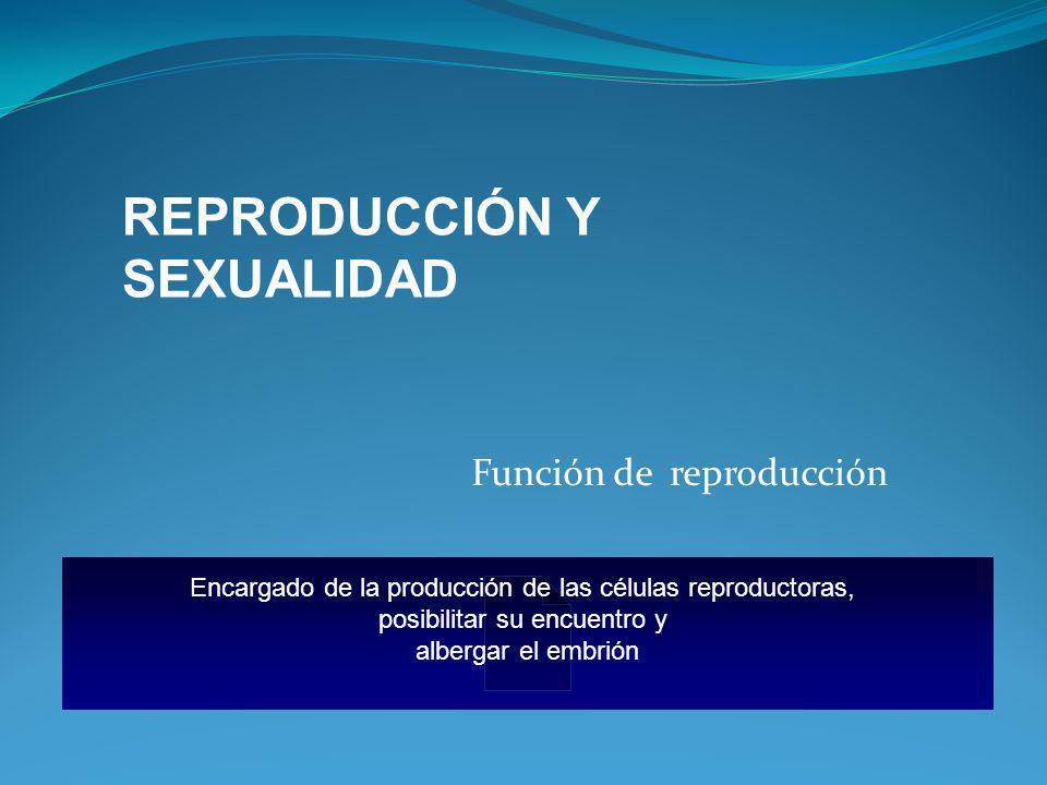 Función de reproducción Encargado de la producción de las células reproductoras, posibilitar su encuentro y albergar el embrión REPRODUCCIÓN Y SEXUALI