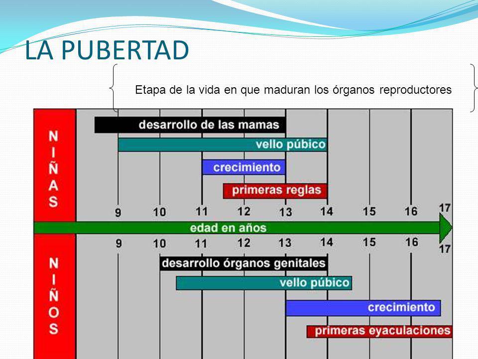 Método sintotérmico: Ogino-Knaus Método SINTOTÉRMICO OGINO-KNAUS TEMPERATURA BASAL BILLINGS Método natural que requiere de el registro de datos y observaciones, Durante periodos prolongados de tiempo Útil para parejas estables y de vida ordenada Requiere de un conocimiento profundo del funcionamiento del ciclo de la mujer OGINO-KNAUS: Método del calendario Calcular el día de la ovulación en periodos de 28 días: el día 14 Cálculo: Los espermatozoides viven un máximo de 3-5 días El óvulo vive un máximo de 24 horas Periodo no seguro: 5 días antes de la ovulación y 3 días después de la ovulación