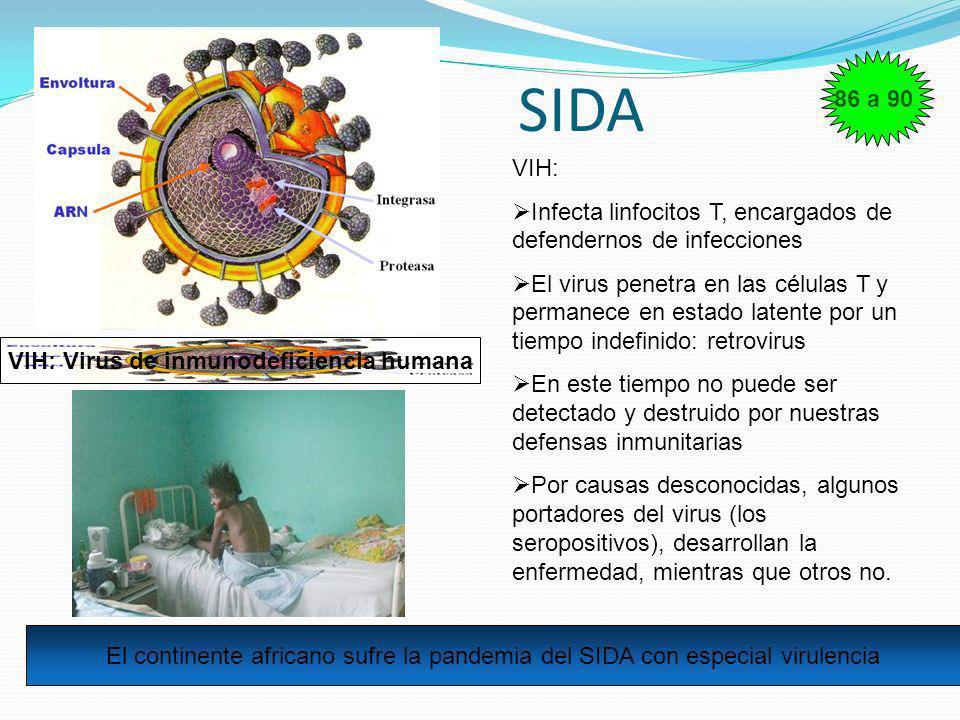 SIDA VIH: Virus de inmunodeficiencia humana VIH: Infecta linfocitos T, encargados de defendernos de infecciones El virus penetra en las células T y pe