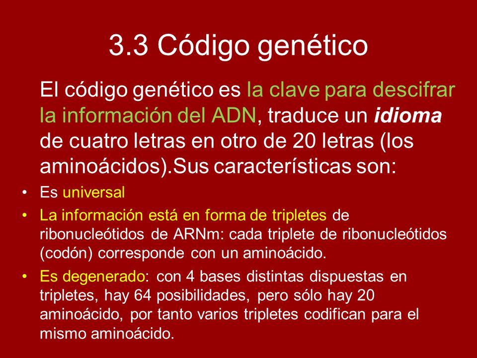 3.3 Código genético El código genético es la clave para descifrar la información del ADN, traduce un idioma de cuatro letras en otro de 20 letras (los
