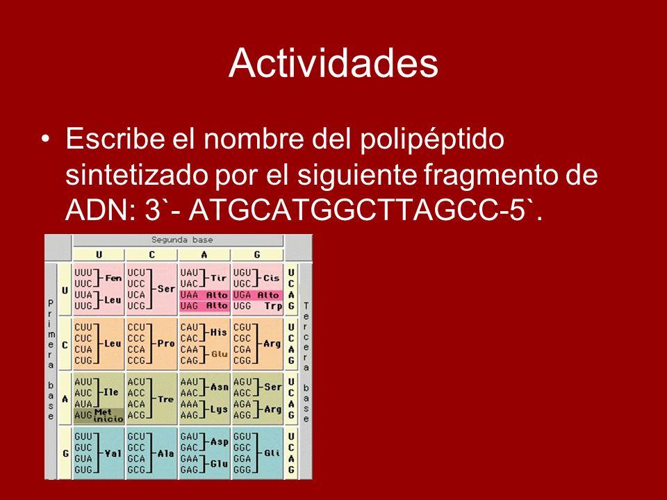 Actividades Escribe el nombre del polipéptido sintetizado por el siguiente fragmento de ADN: 3`- ATGCATGGCTTAGCC-5`.