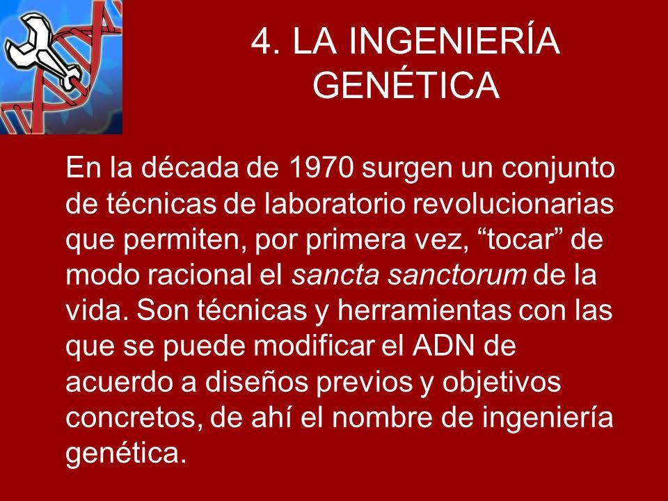 4. LA INGENIERÍA GENÉTICA En la década de 1970 surgen un conjunto de técnicas de laboratorio revolucionarias que permiten, por primera vez, tocar de m