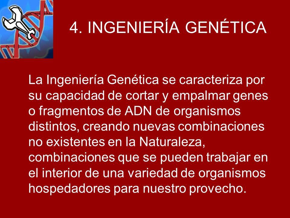 4. INGENIERÍA GENÉTICA La Ingeniería Genética se caracteriza por su capacidad de cortar y empalmar genes o fragmentos de ADN de organismos distintos,