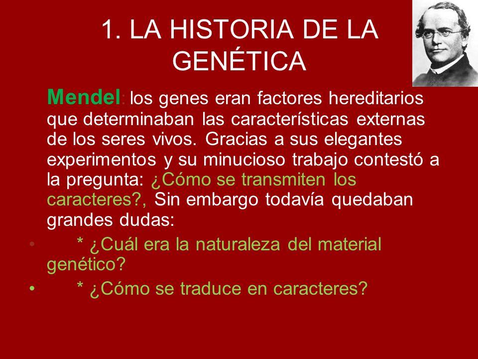 1. LA HISTORIA DE LA GENÉTICA Mendel : los genes eran factores hereditarios que determinaban las características externas de los seres vivos. Gracias