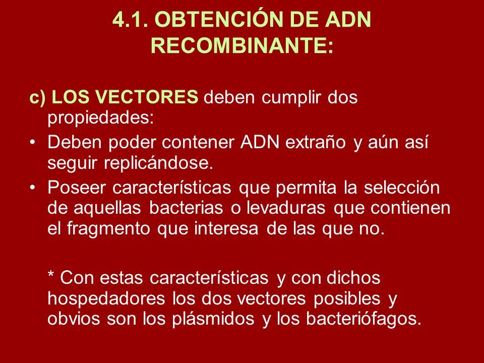 4.1. OBTENCIÓN DE ADN RECOMBINANTE: c) LOS VECTORES deben cumplir dos propiedades: Deben poder contener ADN extraño y aún así seguir replicándose. Pos