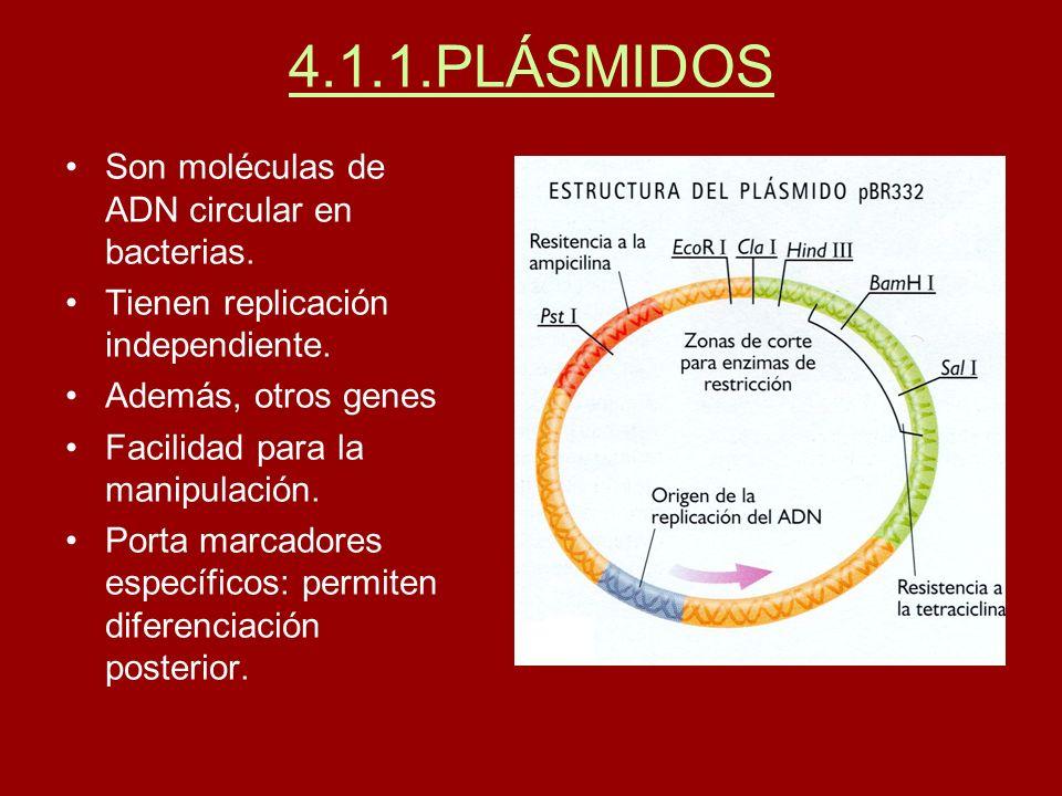 4.1.1.PLÁSMIDOS Son moléculas de ADN circular en bacterias. Tienen replicación independiente. Además, otros genes Facilidad para la manipulación. Port