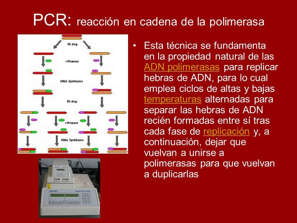 PCR: reacción en cadena de la polimerasa Esta técnica se fundamenta en la propiedad natural de las ADN polimerasas para replicar hebras de ADN, para l