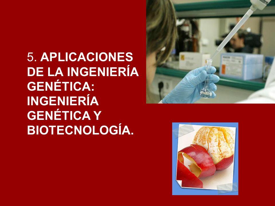 5. APLICACIONES DE LA INGENIERÍA GENÉTICA: INGENIERÍA GENÉTICA Y BIOTECNOLOGÍA.