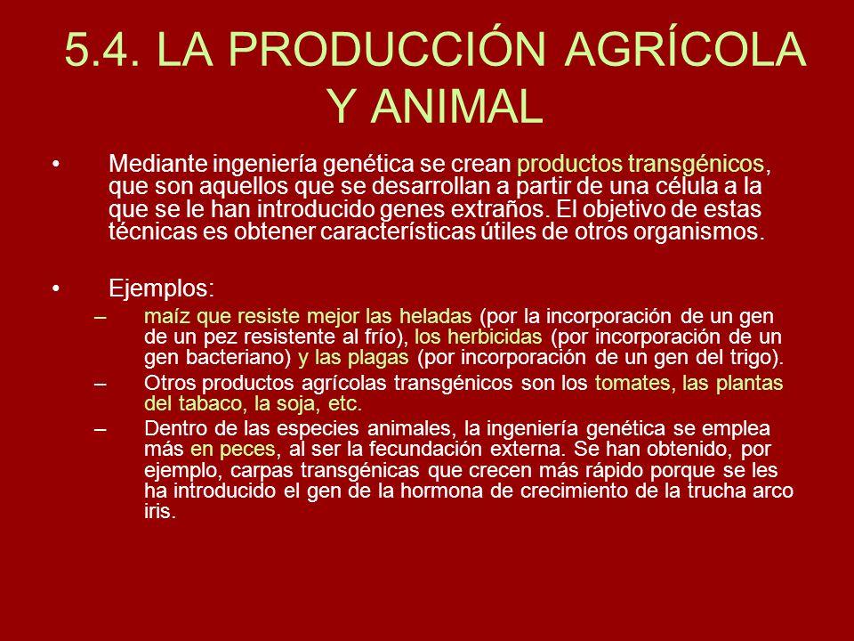 5.4. LA PRODUCCIÓN AGRÍCOLA Y ANIMAL Mediante ingeniería genética se crean productos transgénicos, que son aquellos que se desarrollan a partir de una