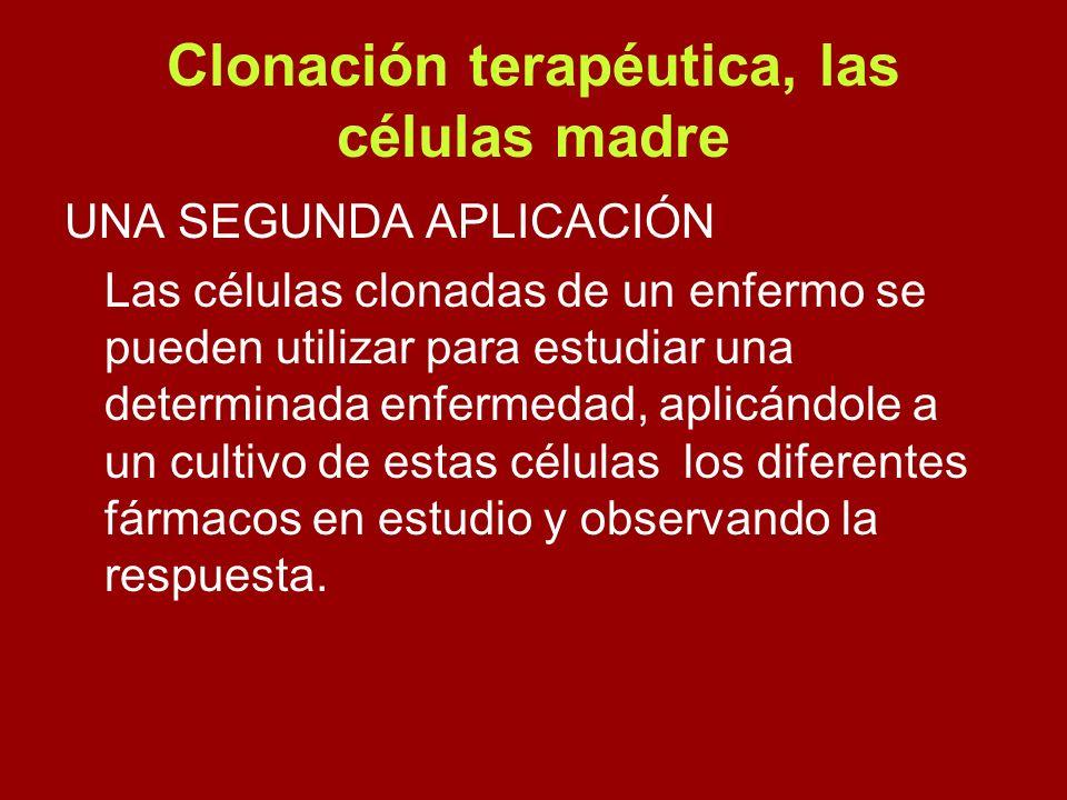 Clonación terapéutica, las células madre UNA SEGUNDA APLICACIÓN Las células clonadas de un enfermo se pueden utilizar para estudiar una determinada en