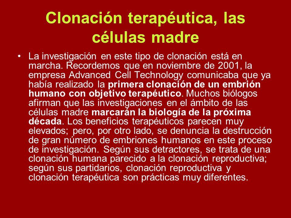 Clonación terapéutica, las células madre La investigación en este tipo de clonación está en marcha. Recordemos que en noviembre de 2001, la empresa Ad