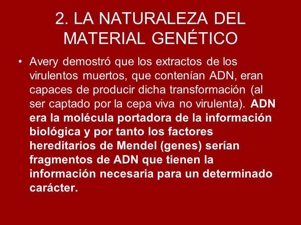 2. LA NATURALEZA DEL MATERIAL GENÉTICO Avery demostró que los extractos de los virulentos muertos, que contenían ADN, eran capaces de producir dicha t
