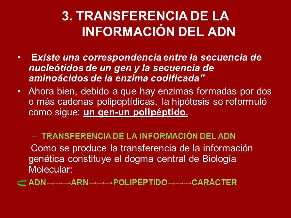 3. TRANSFERENCIA DE LA INFORMACIÓN DEL ADN Existe una correspondencia entre la secuencia de nucleótidos de un gen y la secuencia de aminoácidos de la
