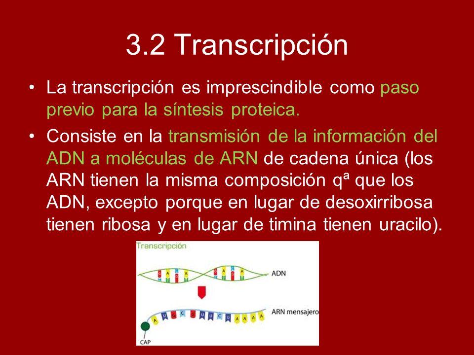 3.2 Transcripción La transcripción es imprescindible como paso previo para la síntesis proteica. Consiste en la transmisión de la información del ADN