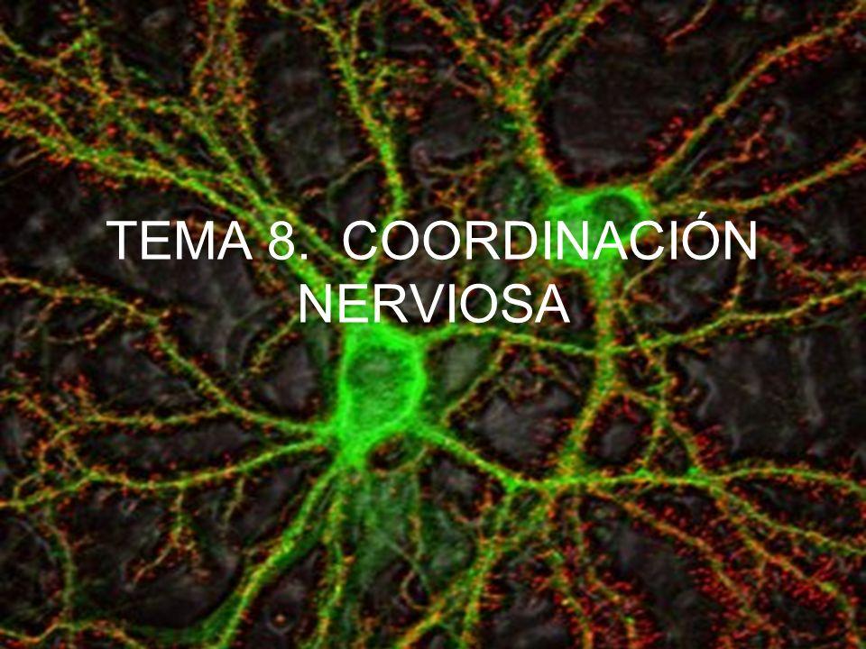 Control Involuntario de las funciones básicas por parte del Sistema nervioso Autónomo Contracción de la pupila Dilatación de la pupila Estimulación de la secreción salival Inhibición de la secreción salival Disminución del ritmo cardíaco Aumento del ritmo cardíaco Constricción bronquial Dilatación bronquial Aumento de la movilidad gástrica Inhibición de la liberación de glucosa Inhibición de la secreción de adrenalina Contracción del ano Contracción de la vejiga de la orina Relajación del ano Relajación de la vejiga de la orina Estimulación de la secreción de adrenalina Inhibición de la movilidad gástrica Estimulación de la liberación de glucosa