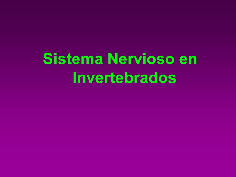 PÓLIPOS Y MEDUSAS PRESENTAN UNA RED DIFUSA DE NEURONAS ESTRELLADAS QUE TRANSMITEN LOS IMPULSOS NERVIOSOS EN TODAS DIRECCIONES Red difusa