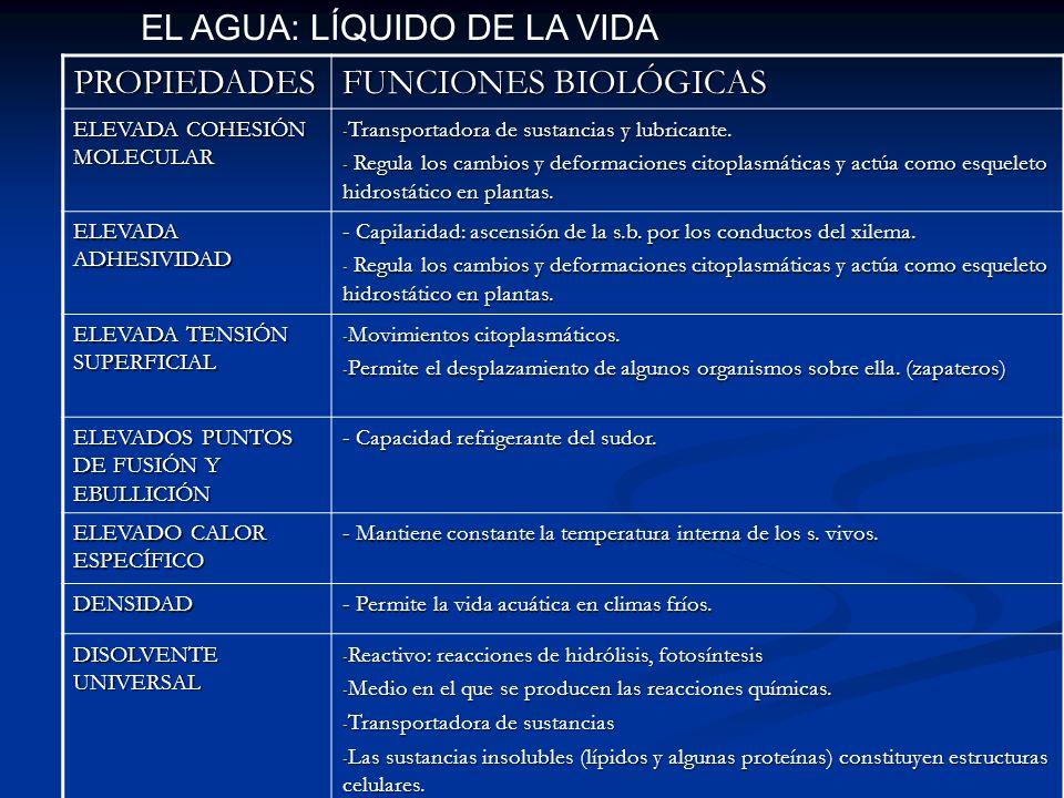 PROPIEDADES FUNCIONES BIOLÓGICAS ELEVADA COHESIÓN MOLECULAR - Transportadora de sustancias y lubricante. - Regula los cambios y deformaciones citoplas