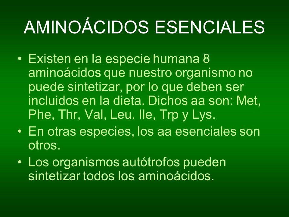 AMINOÁCIDOS ESENCIALES Existen en la especie humana 8 aminoácidos que nuestro organismo no puede sintetizar, por lo que deben ser incluidos en la diet
