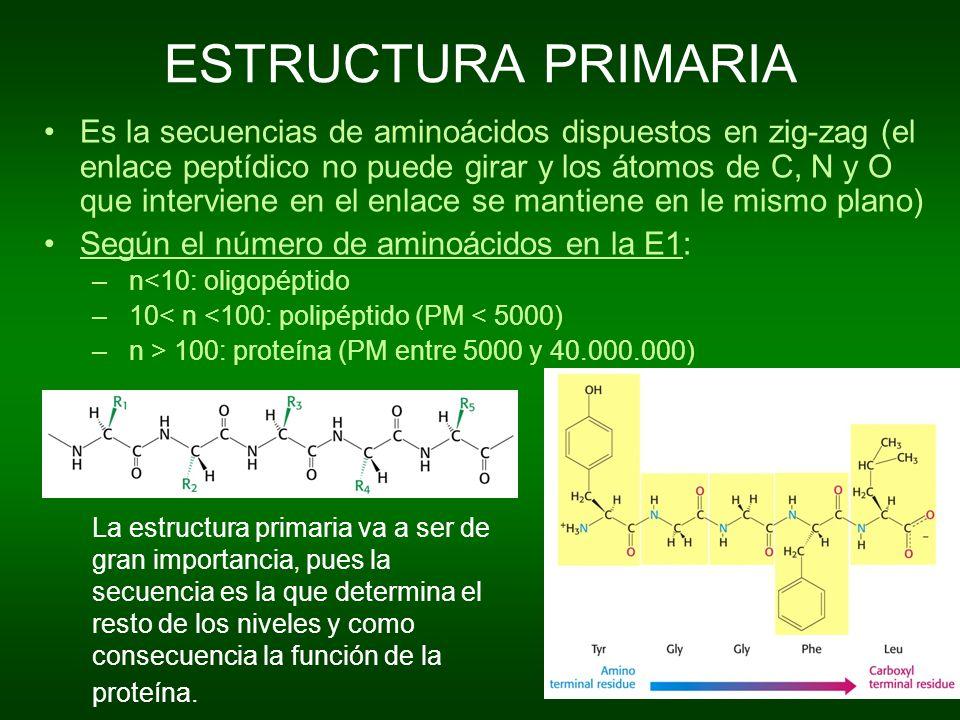 ESTRUCTURA PRIMARIA Es la secuencias de aminoácidos dispuestos en zig-zag (el enlace peptídico no puede girar y los átomos de C, N y O que interviene