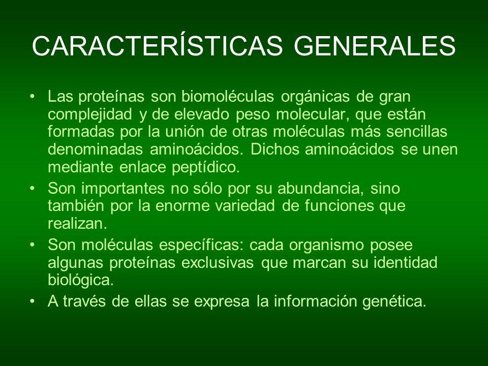 CARACTERÍSTICAS GENERALES Las proteínas son biomoléculas orgánicas de gran complejidad y de elevado peso molecular, que están formadas por la unión de