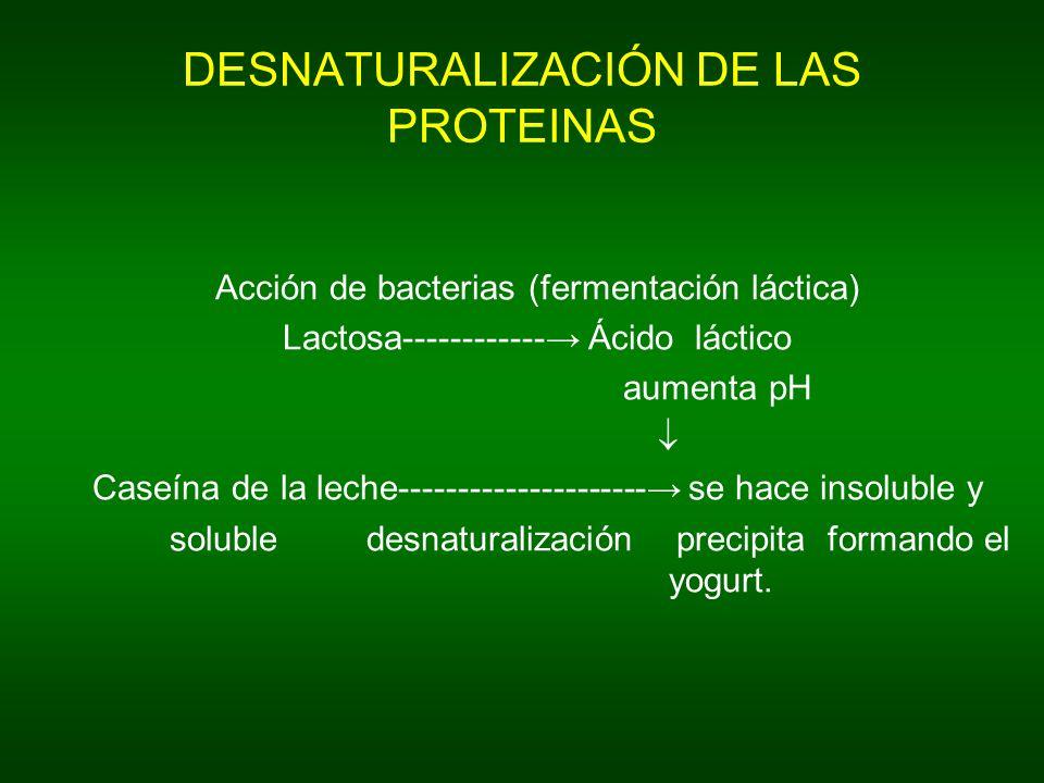 DESNATURALIZACIÓN DE LAS PROTEINAS Acción de bacterias (fermentación láctica) Lactosa------------ Ácido láctico aumenta pH Caseína de la leche--------