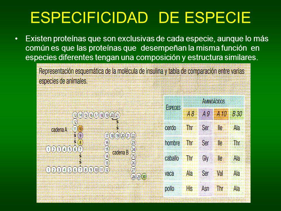ESPECIFICIDAD DE ESPECIE Existen proteínas que son exclusivas de cada especie, aunque lo más común es que las proteínas que desempeñan la misma funció
