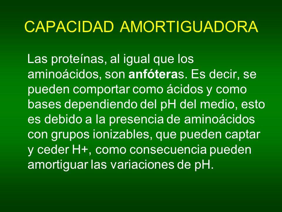 CAPACIDAD AMORTIGUADORA Las proteínas, al igual que los aminoácidos, son anfóteras. Es decir, se pueden comportar como ácidos y como bases dependiendo