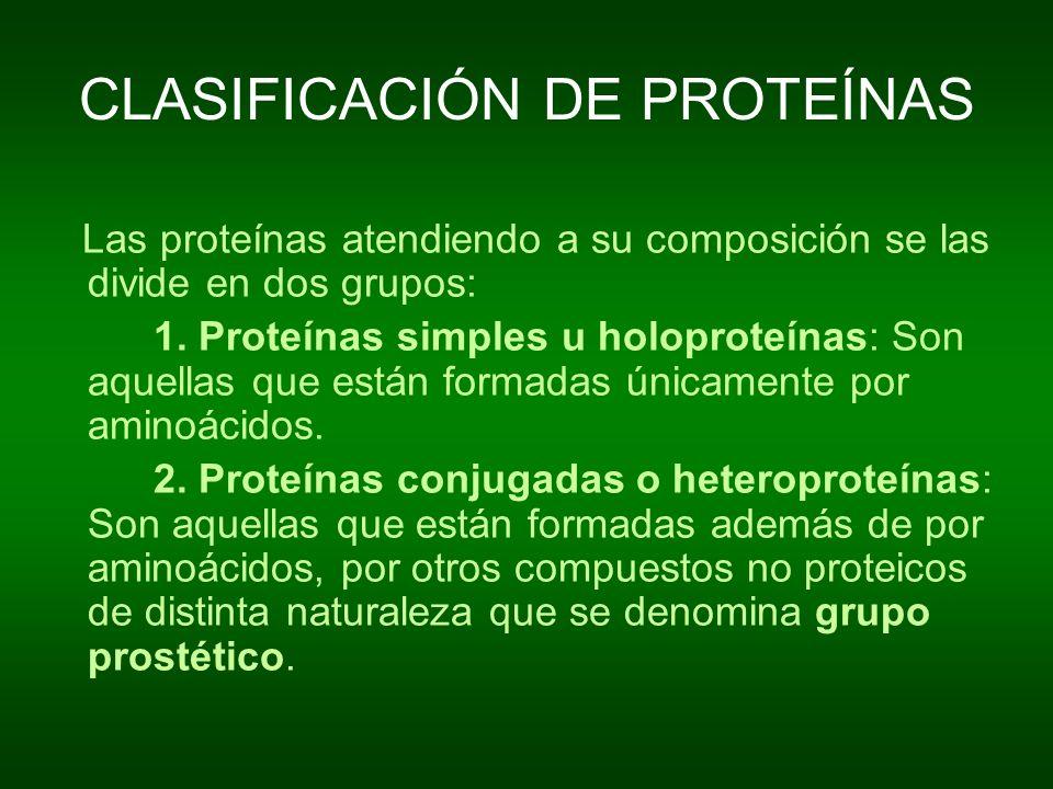 CLASIFICACIÓN DE PROTEÍNAS Las proteínas atendiendo a su composición se las divide en dos grupos: 1. Proteínas simples u holoproteínas: Son aquellas q