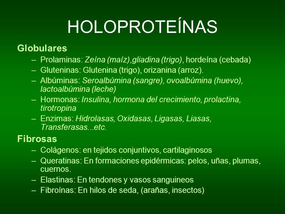 HOLOPROTEÍNAS Globulares –Prolaminas: Zeína (maíz),gliadina (trigo), hordeína (cebada) –Gluteninas: Glutenina (trigo), orizanina (arroz). –Albúminas: