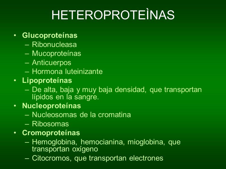 HETEROPROTEÌNAS Glucoproteínas –Ribonucleasa –Mucoproteínas –Anticuerpos –Hormona luteinizante Lipoproteínas –De alta, baja y muy baja densidad, que t