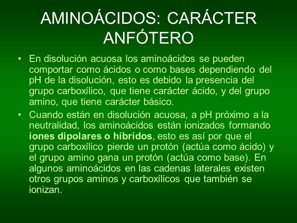 AMINOÁCIDOS: CARÁCTER ANFÓTERO En disolución acuosa los aminoácidos se pueden comportar como ácidos o como bases dependiendo del pH de la disolución,
