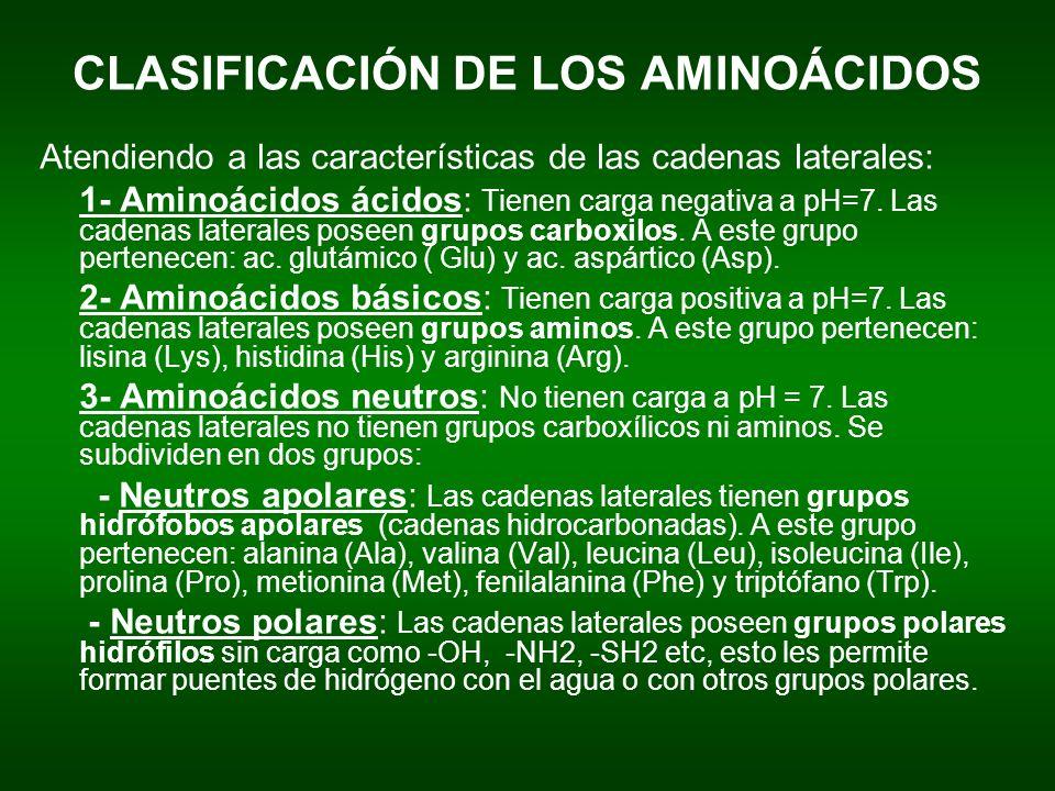 CLASIFICACIÓN DE LOS AMINOÁCIDOS Atendiendo a las características de las cadenas laterales: 1- Aminoácidos ácidos: Tienen carga negativa a pH=7. Las c