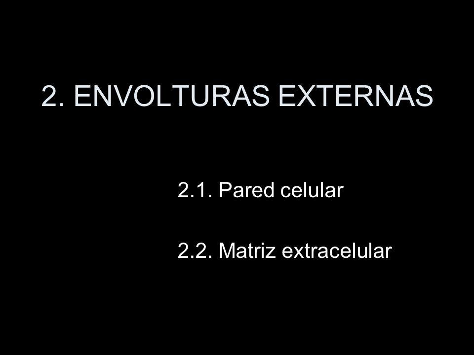 2. ENVOLTURAS EXTERNAS 2.1. Pared celular 2.2. Matriz extracelular