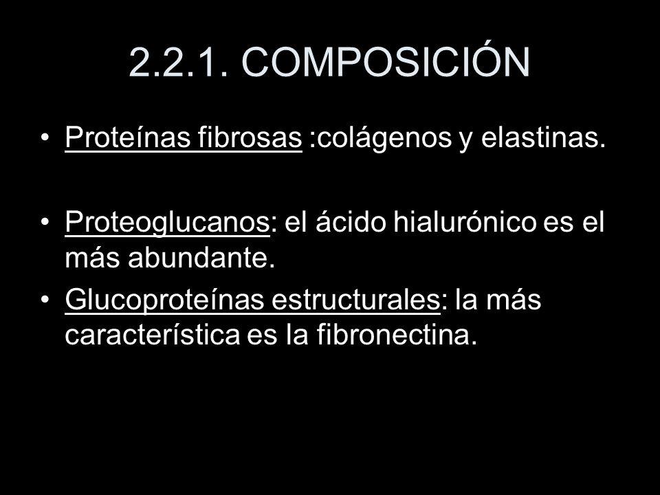 2.2.1. COMPOSICIÓN Proteínas fibrosas :colágenos y elastinas. Proteoglucanos: el ácido hialurónico es el más abundante. Glucoproteínas estructurales: