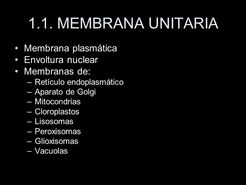 1.1. MEMBRANA UNITARIA Membrana plasmática Envoltura nuclear Membranas de: –Retículo endoplasmático –Aparato de Golgi –Mitocondrias –Cloroplastos –Lis