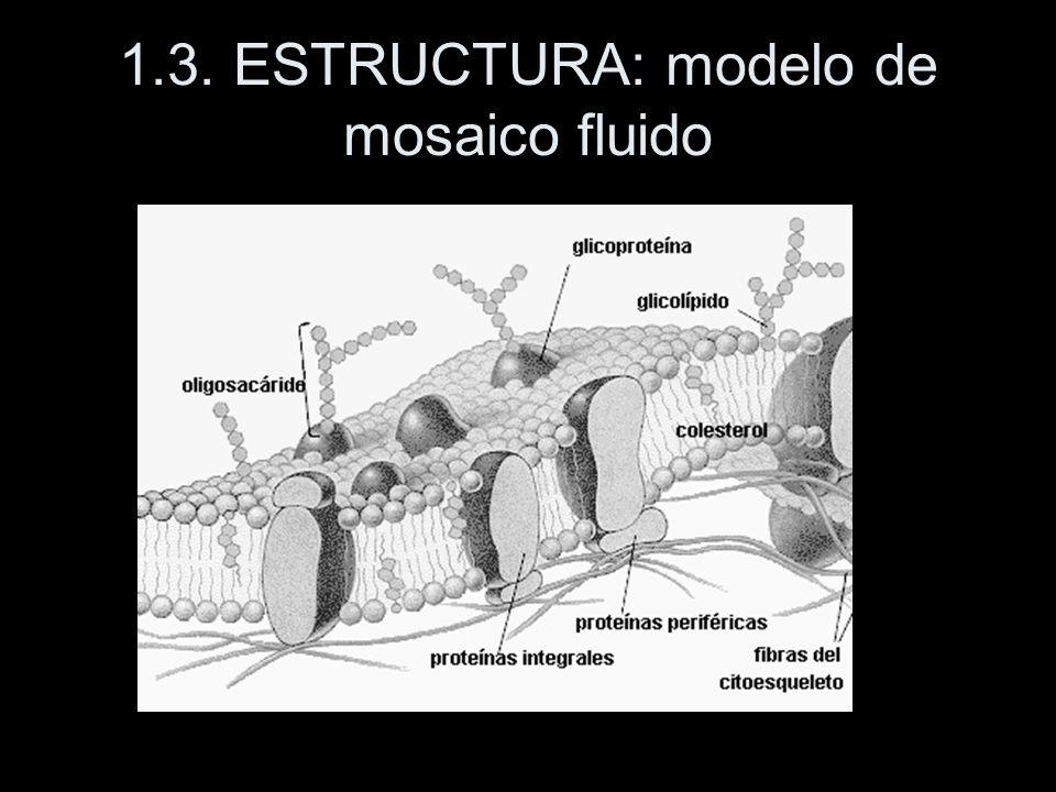 1.3. ESTRUCTURA: modelo de mosaico fluido