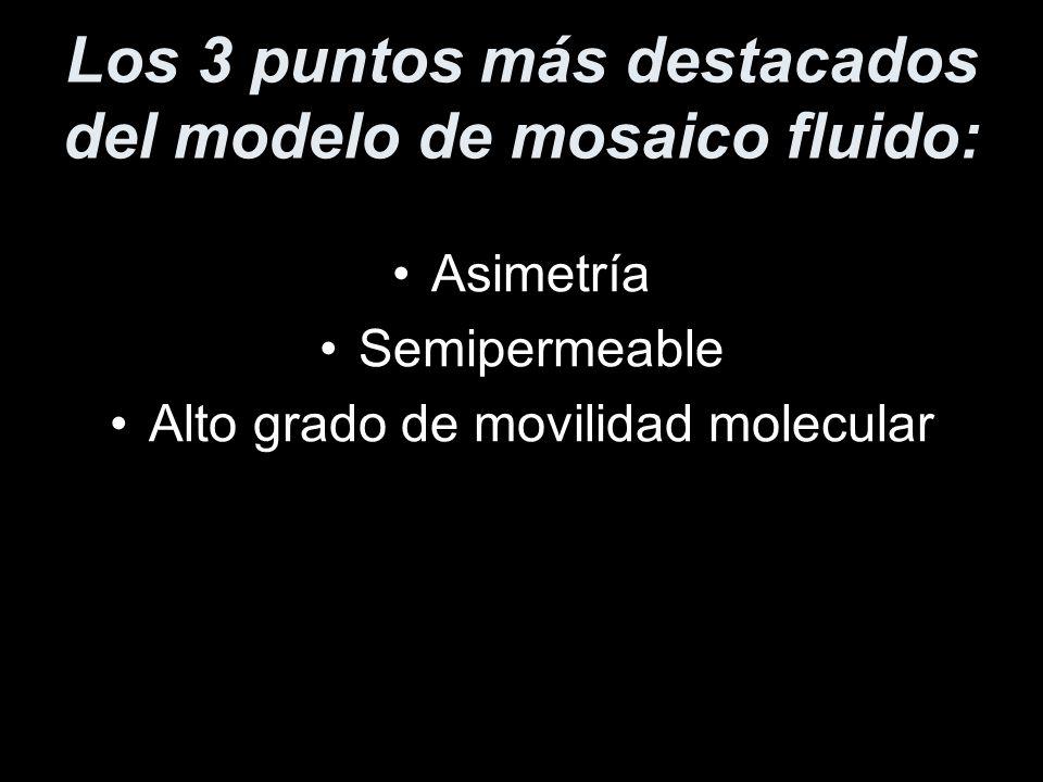 Los 3 puntos más destacados del modelo de mosaico fluido: Asimetría Semipermeable Alto grado de movilidad molecular