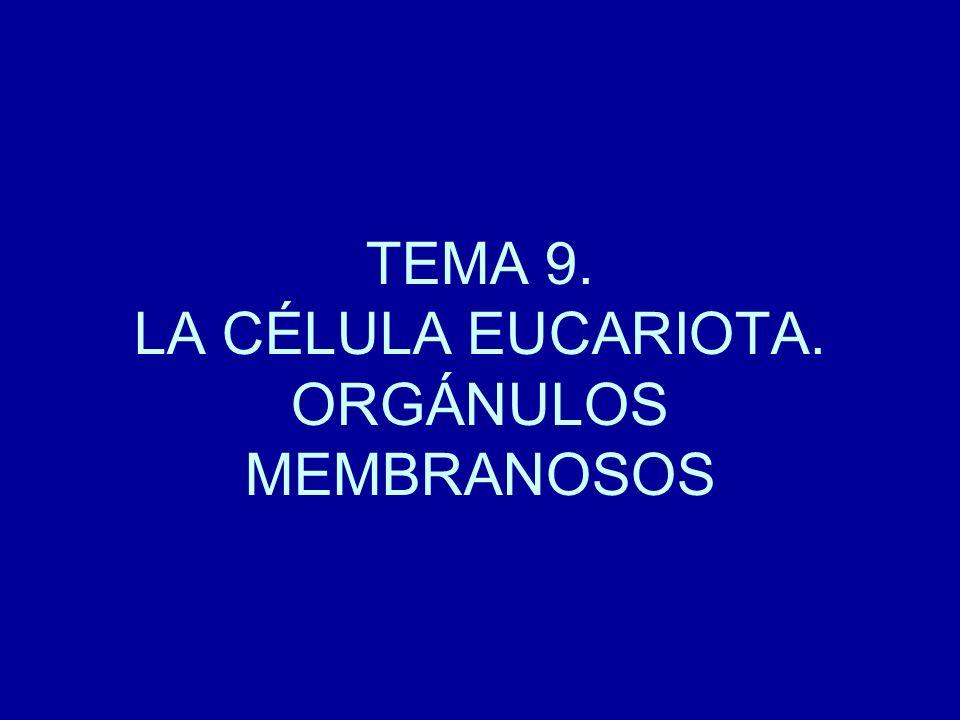 TEMA 9. LA CÉLULA EUCARIOTA. ORGÁNULOS MEMBRANOSOS