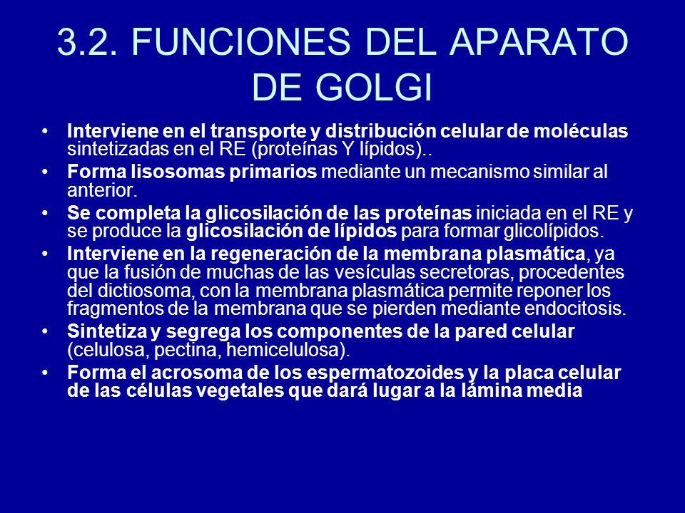 3.2. FUNCIONES DEL APARATO DE GOLGI Interviene en el transporte y distribución celular de moléculas sintetizadas en el RE (proteínas Y lípidos).. Form