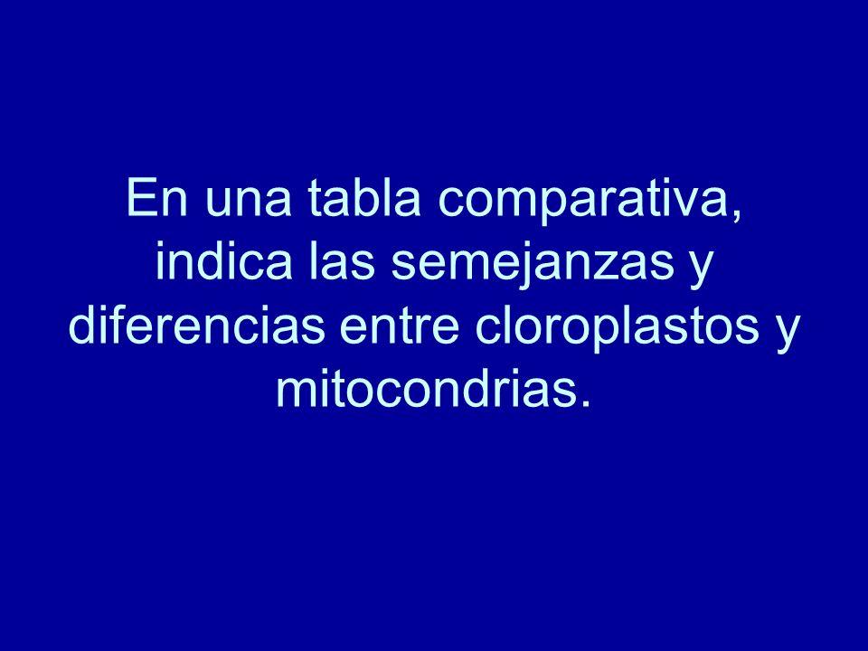 En una tabla comparativa, indica las semejanzas y diferencias entre cloroplastos y mitocondrias.