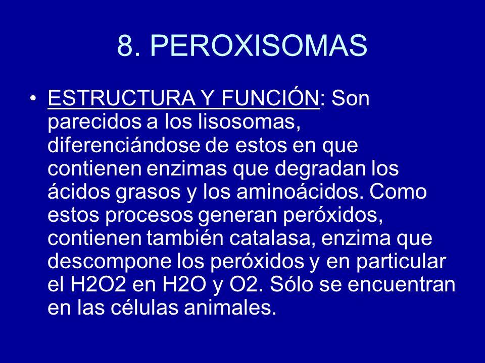 8. PEROXISOMAS ESTRUCTURA Y FUNCIÓN: Son parecidos a los lisosomas, diferenciándose de estos en que contienen enzimas que degradan los ácidos grasos y