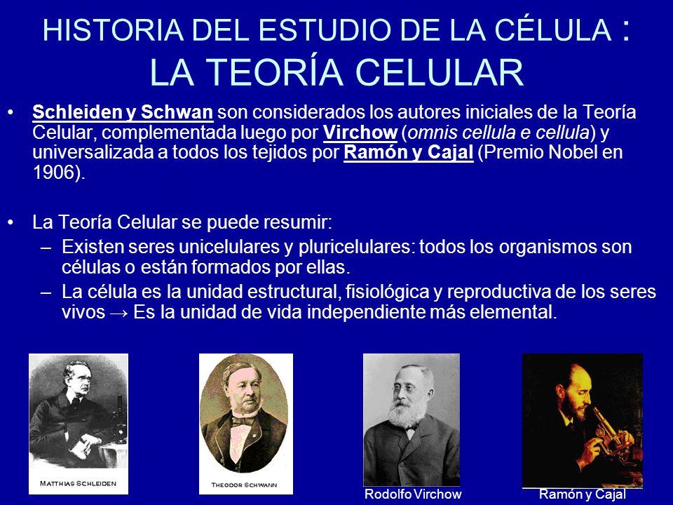 HISTORIA DEL ESTUDIO DE LA CÉLULA : LA TEORÍA CELULAR Schleiden y Schwan son considerados los autores iniciales de la Teoría Celular, complementada lu